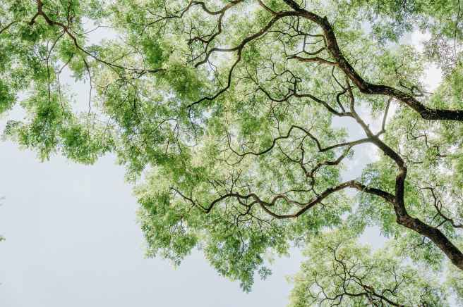 arbre branche brillant contre plongee