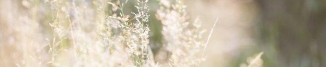 cropped-graminees-1.jpg